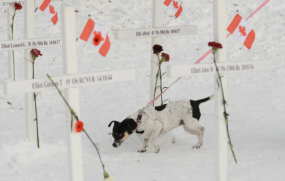 Many Calgarians and their beloved animals, take time to remember those who fought for our freedom, while they walk through the field of crosses on Memorial drive on Tuesday Nov. 11, 2014.(Photo by Victoria Du Bois/The Press)