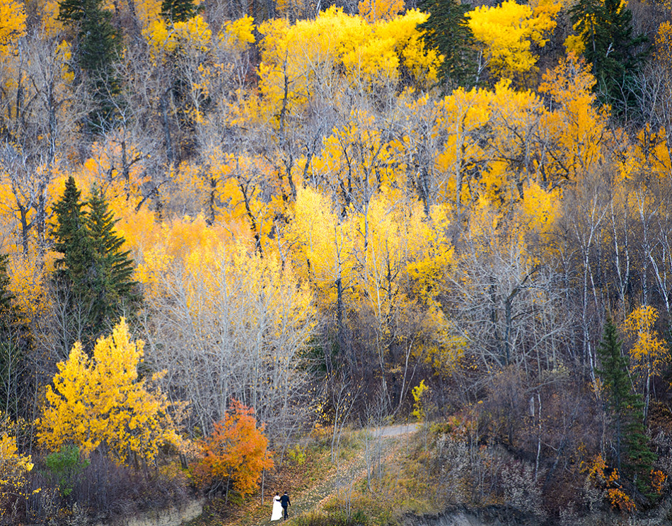Fall Wedding: A soon to be wed couple walk the River Valley near the High Level Bridge in Edmonton. The couple were having their wedding photos taken with the fall colours. (Photo by Andy Maxwell Mawji/The Press)